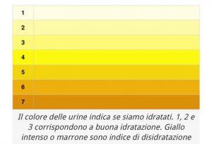 bioenergy nutrition integratori sportivi alimentazione cuneo Colore delle urine e idratazione