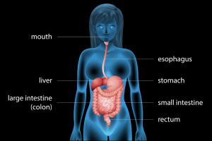 bioenergy nutrition integratori sportivi alimentazione cuneo tempi di digestione