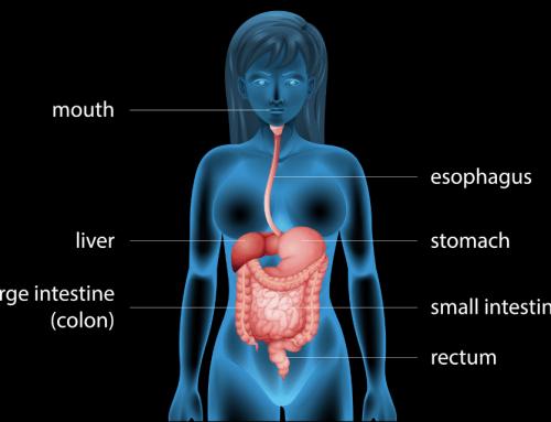 Tempi di digestione