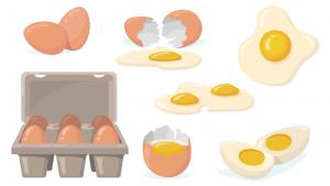proteine dell'uovo bioenergy nutrition integratori sportivi alimentazione cuneo